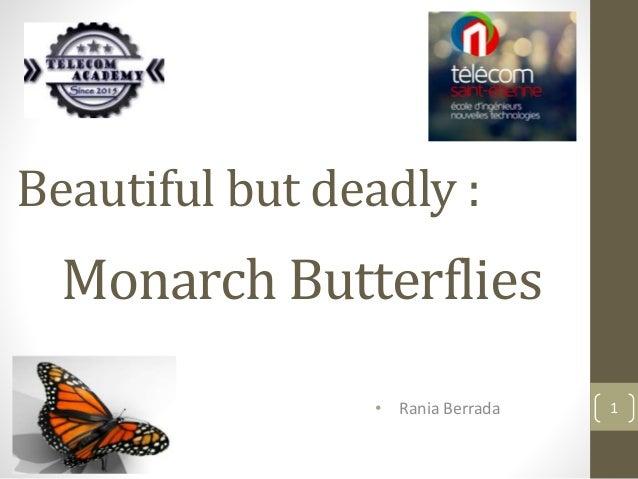 Beautiful but deadly : Monarch Butterflies • Rania Berrada 1