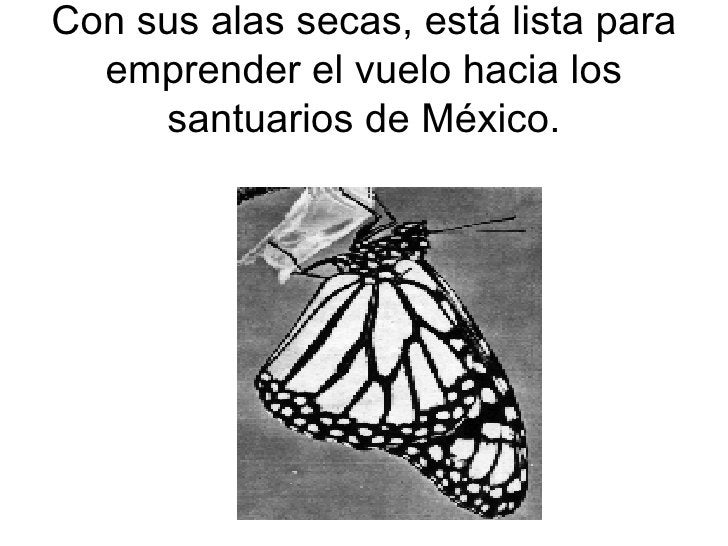 Con sus alas secas, está lista para emprender el vuelo hacia los santuarios de México.
