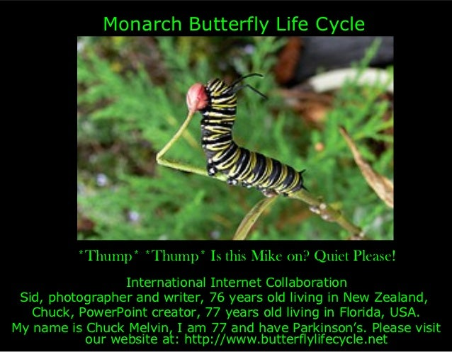 Monarch Butterfly Life Cycle          *Thump* *Thump* Is this Mike on? Quiet Please!                 International Interne...