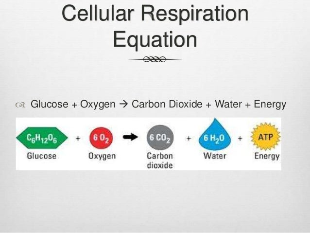 Respiration homework help
