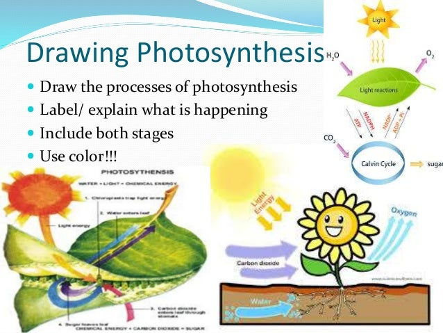Process Of Using The Sun S Energy To Make Food