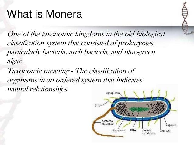 Monera And Protista