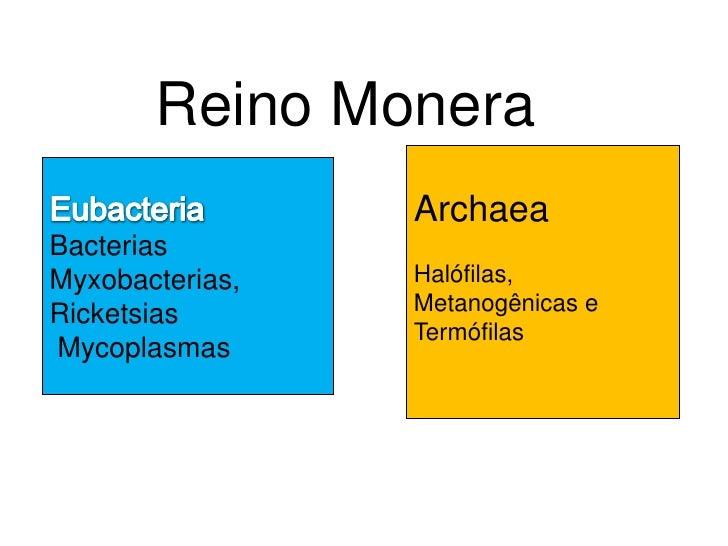 Reino Monera                  Archaea Bacterias Myxobacterias,   Halófilas, Ricketsias       Metanogênicas e              ...