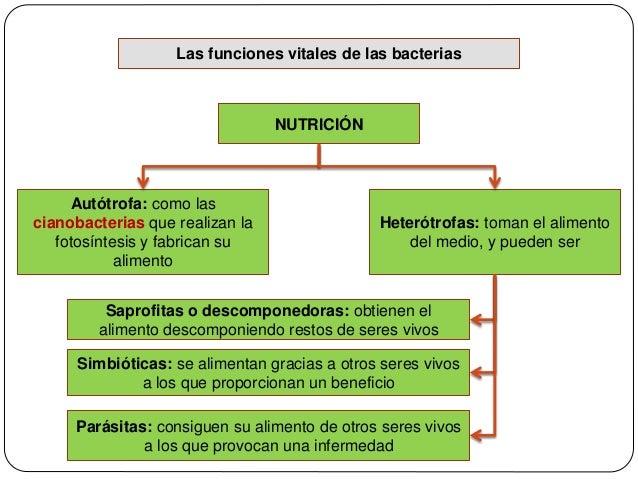 Autotrofos fotosinteticos y quimiosinteticos 7