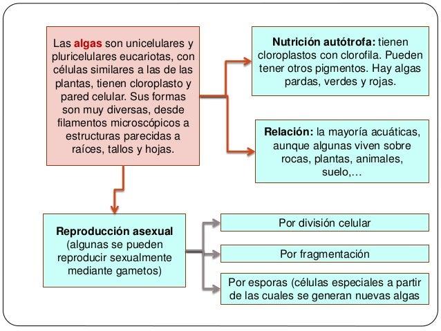Algas pardas reproduccion asexual de las plantas