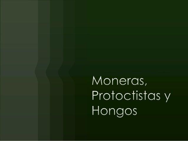 Moneras, protoctistas y hongos