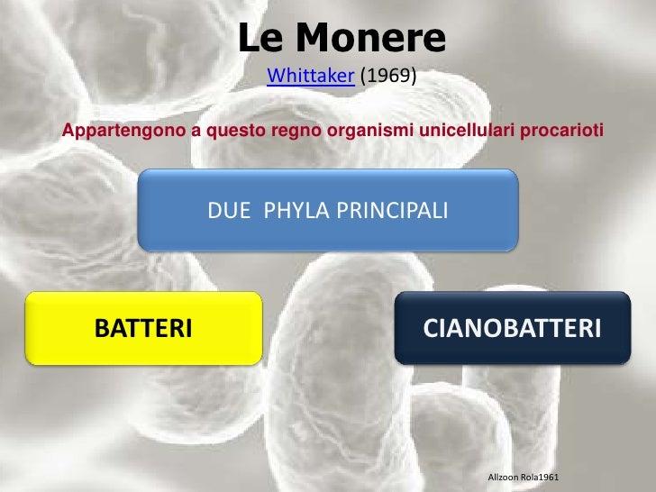 Le MonereWhittaker (1969)<br />Appartengono a questo regno organismi unicellulari procarioti<br />DUE  PHYLA PRINCIPALI<br...