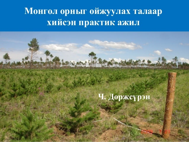 Монгол орныг ойжуулах талаар  хийсэн практик ажил  Ч. Доржсүрэн
