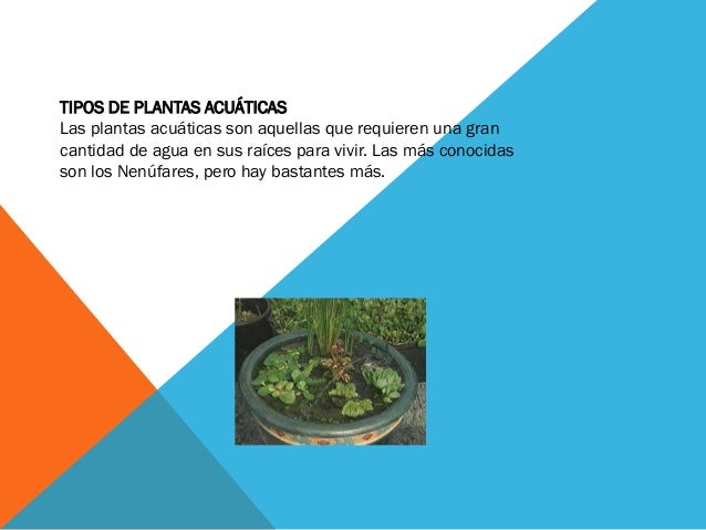 TIPOS DE PLANTAS ACUÁTICASLas plantas acuáticas son aquellas que requieren una grancantidad de agua en sus raíces para viv...
