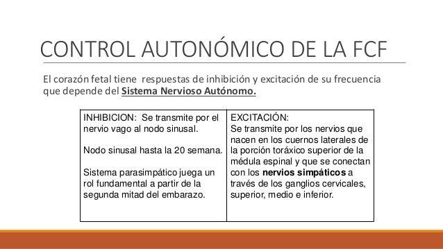 CONTROL DE LA FCF POR QUIMIO Y BARORRECEPTORES QUIMIORRECEPTORES  Están representados por dos grupos:  Cuerpos Aórticos ...