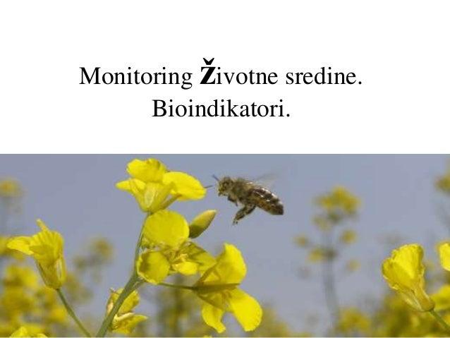 Monitoring životne sredine. Bioindikatori.