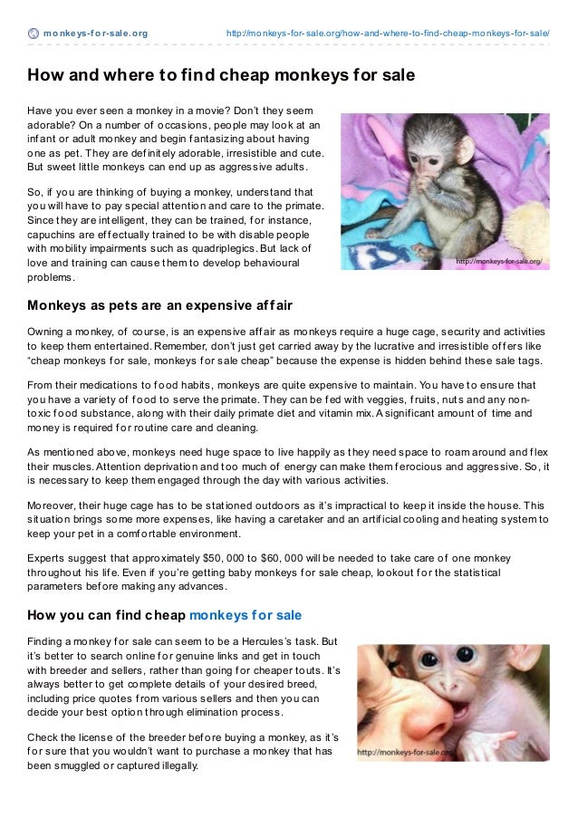 monkeys-f or-sale.org http://monkeys-for-sale.org/how-and-where-to-find-cheap-monkeys-for-sale/How and where to find cheap...