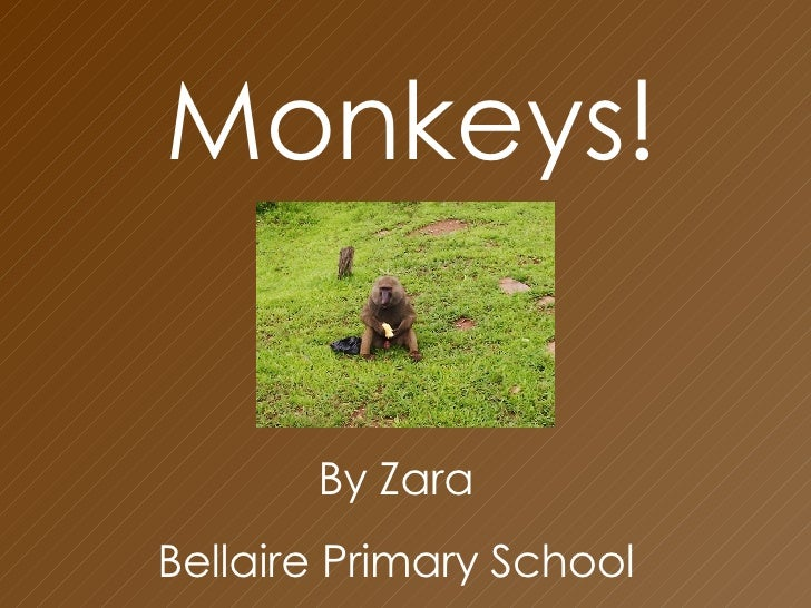 Monkeys! By Zara  Bellaire Primary School