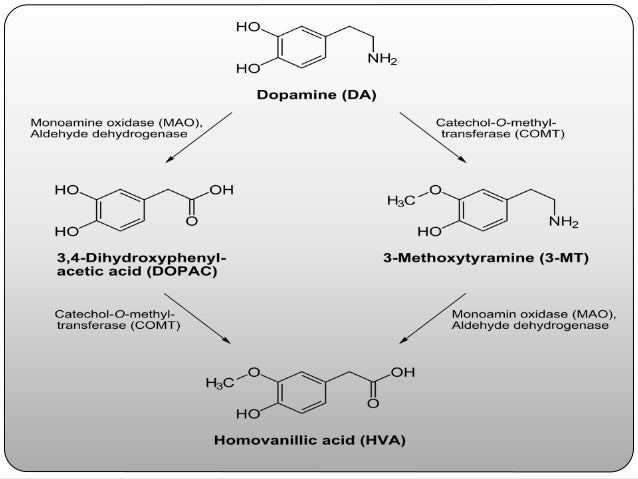 HYPERACTIVITY OF MESOLIMBIC PATHWAY -positive psychotic symptoms accompanying mania, depression, dementia. INCLUDES: -delu...