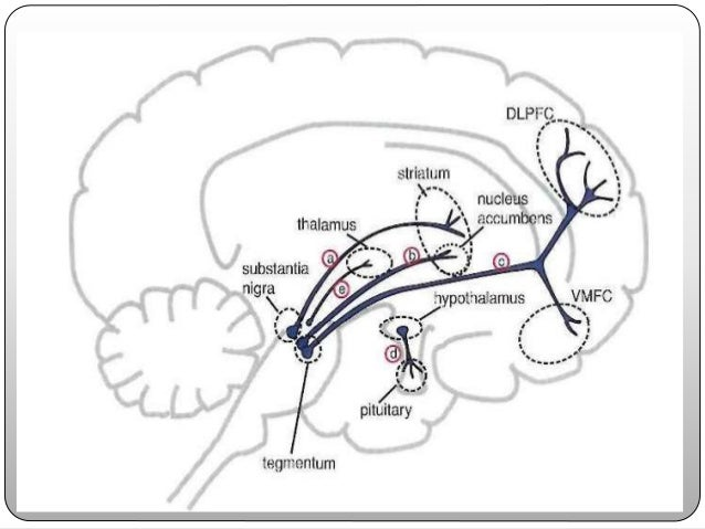 (2) MESOCORTICAL DOPAMINE PATHWAY projects from midbrain ventral tegmental area & sends its axons to areas of the prefront...