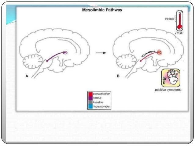 Ventromedial prefrontal cortex Regulates- emotions & affect Hypo function- affective & negative symptoms