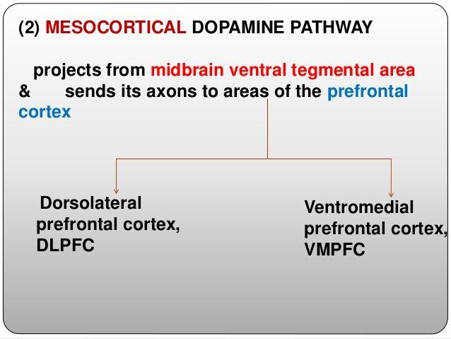 (5) THALAMIC DA PATHWAY arises from multiple sites, -periaqueductal gray, -ventral mesencephalon, -hypothalamic nuclei, & ...