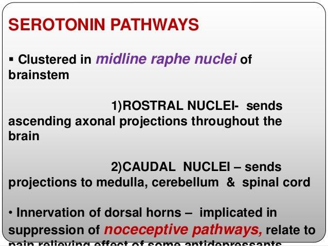  5HT2C Receptors -hippocampal formation, -prefrontal cortex, -amygdala, -striatum, -hypothalamus, & -choroid plexus  Sti...