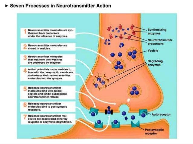 FATE OF NEUROTRANSMITTERS 1. It is consumed ( broken down or used up) at postsynaptic membrane leading to action potential...