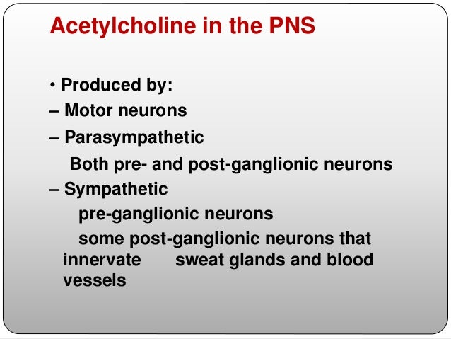  In the periphery, nicotinic acetylcholine receptors are found in skeletal muscle, autonomic ganglia, and the adrenal med...
