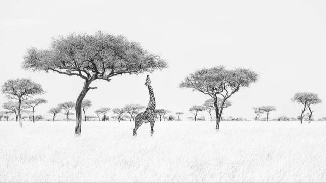 Monochrome Awards 2016 - Wildlife Winners