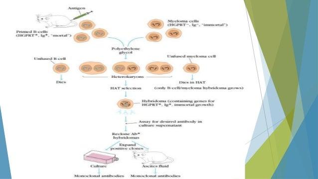 Monoclonal protein study test