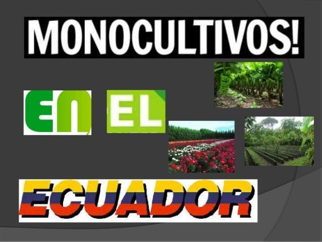 ¿Que es el monocultivo? El monocultivo se refiere a las plantaciones de gran extensión con el cultivo de una sola especie,...