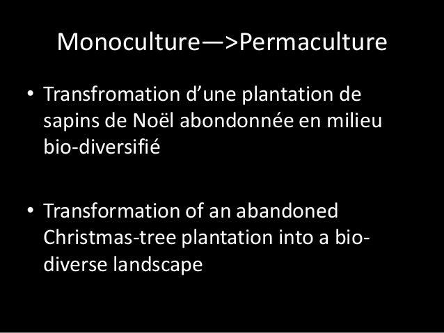 Monoculture—>Permaculture • Transfromation d'une plantation de sapins de Noël abondonnée en milieu bio-diversifié • Transf...