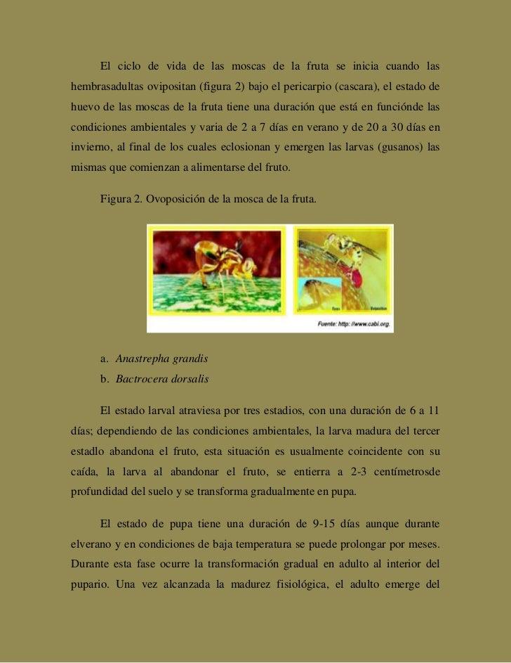 Monografa sobre la mosca de la fruta