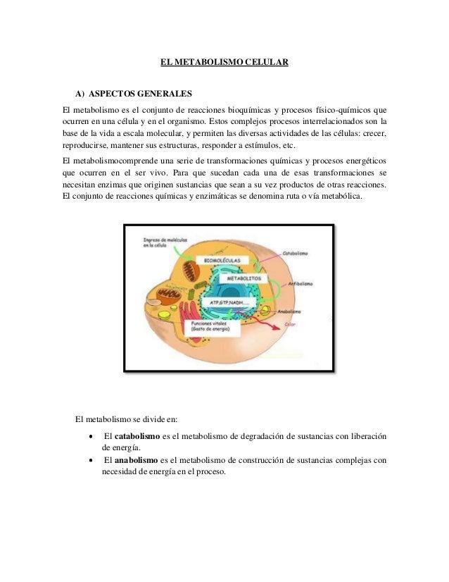 EL METABOLISMO CELULAR  A) ASPECTOS GENERALES El metabolismo es el conjunto de reacciones bioquímicas y procesos físico-qu...