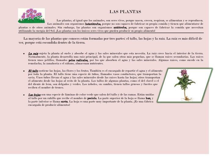 -33655-40640LAS PLANTAS<br />Lasplantas,aligual que los animales, son seres vivos, porque nacen, crecen, respiran, se a...