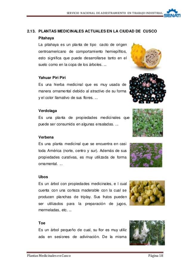Monografia de plantas medicinales for Origen de las plantas ornamentales