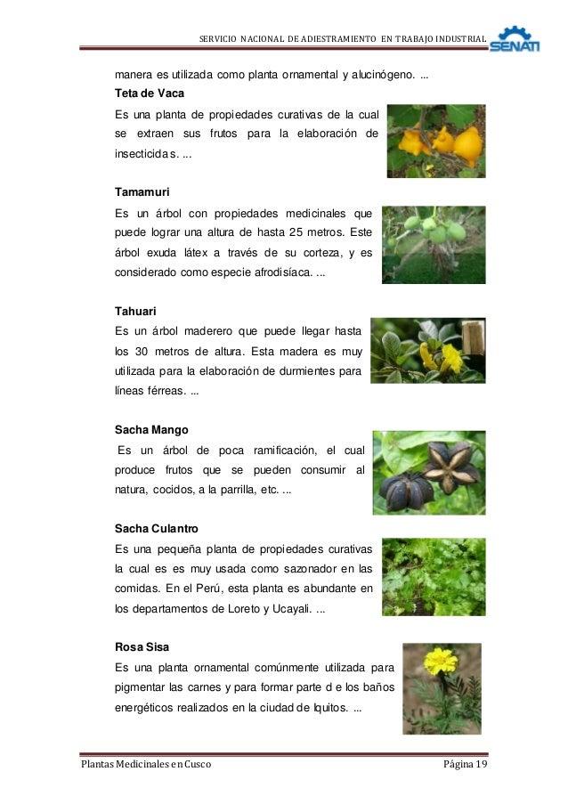 Monografia de plantas medicinales for Plantas ornamentales y medicinales