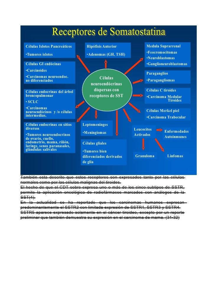 Receptores de Somatostatina  Células Islotes Pancreáticos     Hipófisis Anterior             Medula Suprarrenal           ...