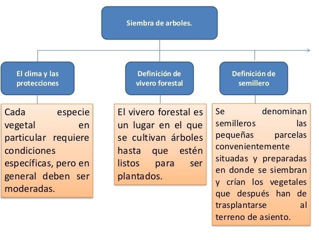 Monografia la reforestacion for Definicion de vivero