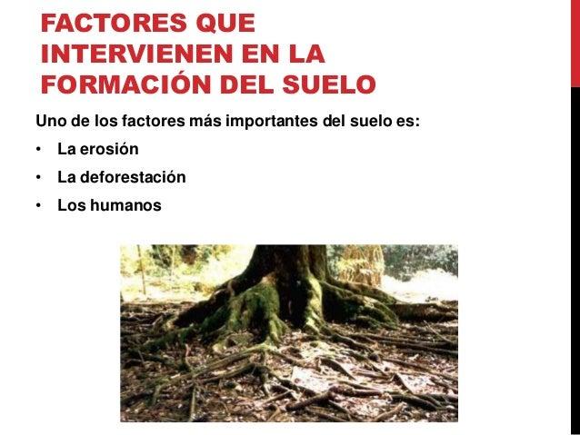 Influencia del cambio clim tico en la fertilidad del suelo for Proceso de formacion del suelo