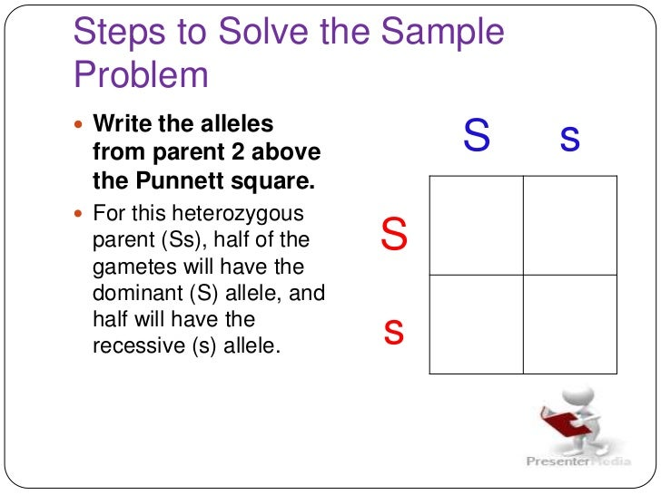how to create a punnett square