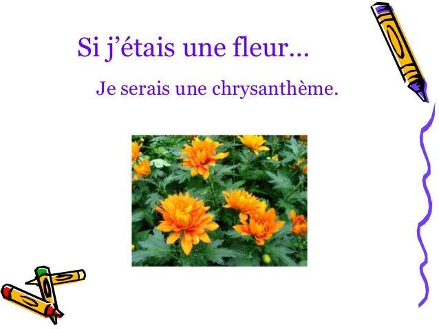 Si j'étais une fleur… Je serais une chrysanthème.