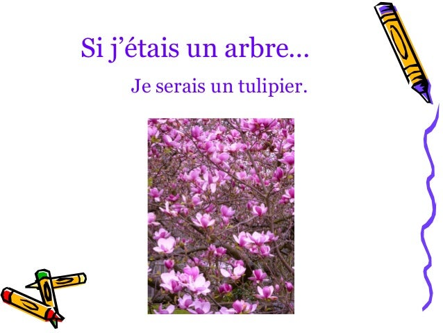 Si j'étais un arbre…    Je serais un tulipier.