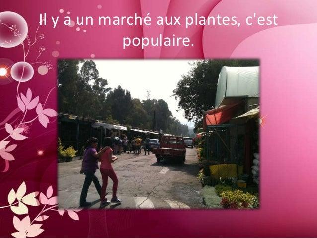 Il y a un marché aux plantes, cest            populaire.
