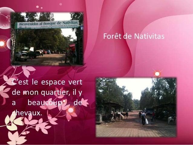 Forêt de NativitasC'est le espace vertde mon quartier, il ya beaucoup dechevaux.
