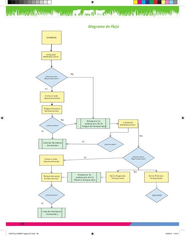 Hermosa Diagrama Hembra Sistema Reproductivo Modelo - Anatomía de ...