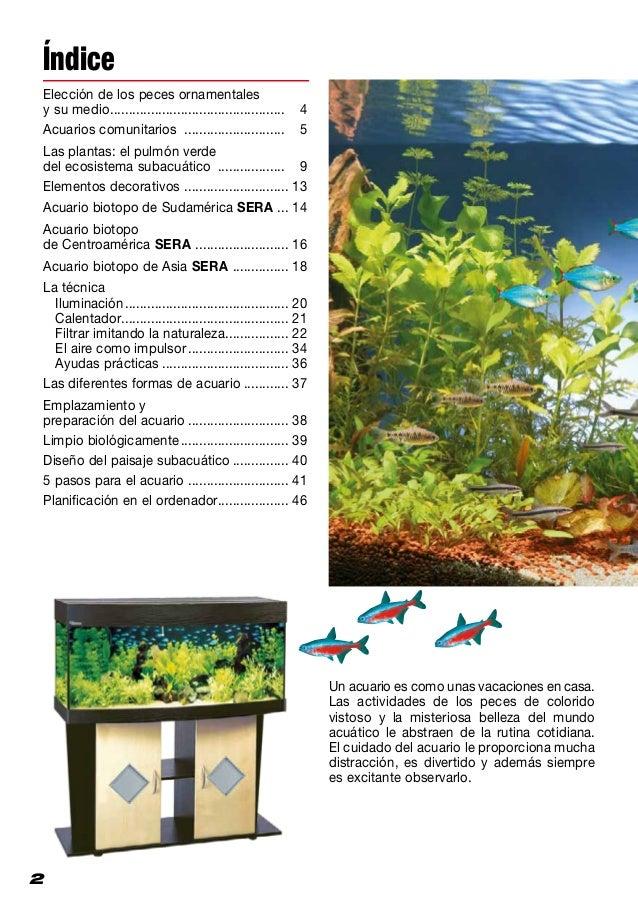 Montaje y decoraci n del acuario for Acuarios ornamentales
