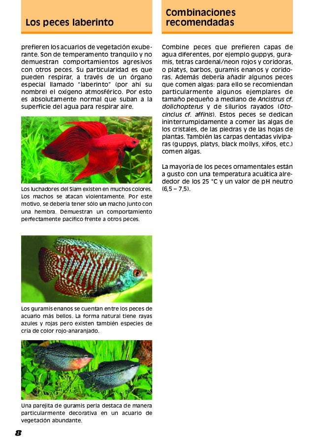 Montaje y decoracion del acuario manual 2 for Peces que no necesitan oxigeno