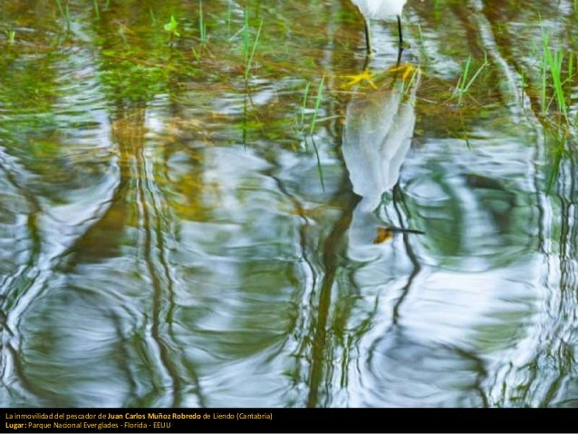 La inmovilidad del pescador de Juan Carlos Muñoz Robredo de Liendo (Cantabria) Lugar: Parque Nacional Everglades - Florida...