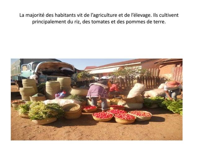 La majorité des habitants vit de l'agriculture et de l'élevage. Ils cultivent principalement du riz, des tomates et des po...