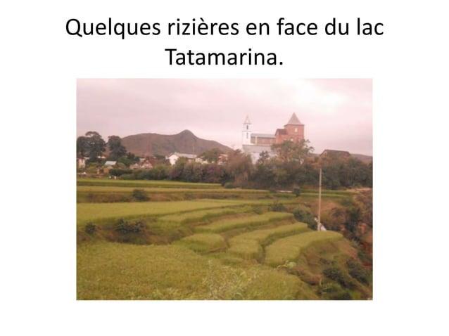 Quelques rizières en face du lac Tatamarina.