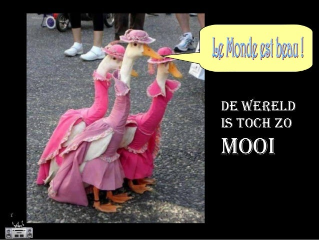 DE WERELD IS TOCH ZO MOOI