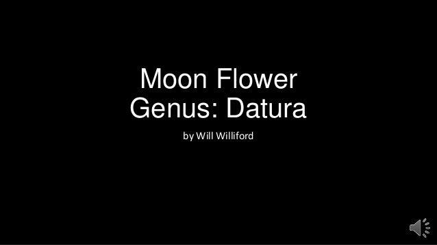 Moon Flower Genus: Datura by Will Williford