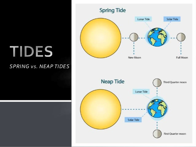 the moon and tides spring vs neap tides 1 638?cb=1481516725 the moon and tides spring vs neap tides